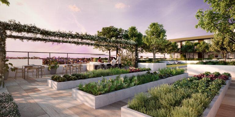 DAHLIA_Roof Garden